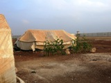 Filare di mais vicino a una tenda (Campo di Bab Al Salam, Siria - linea di confine)